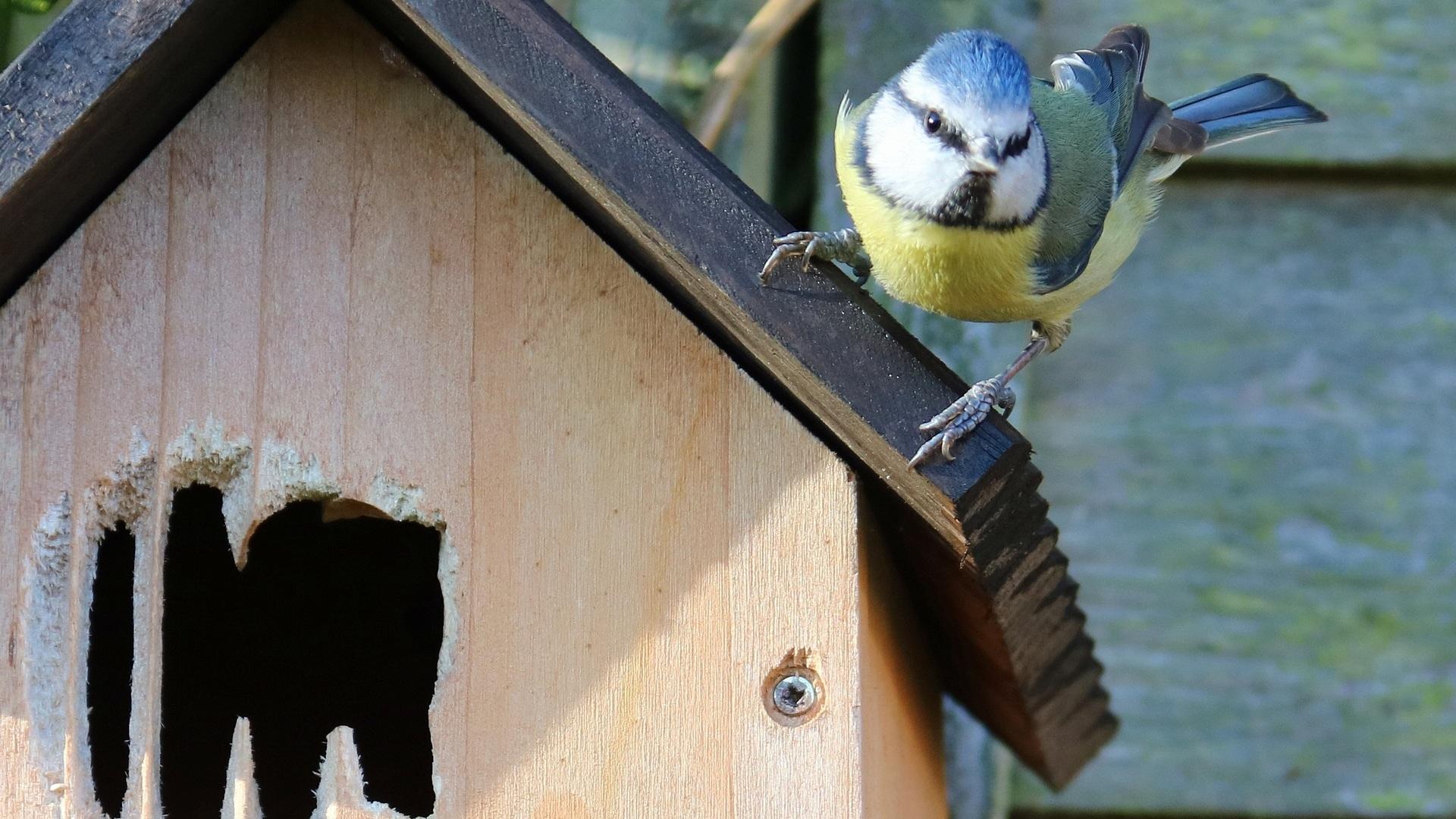 oiseau sur un nichoir