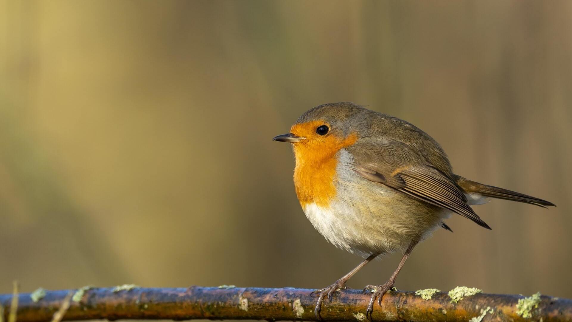La LPO protection des oiseau