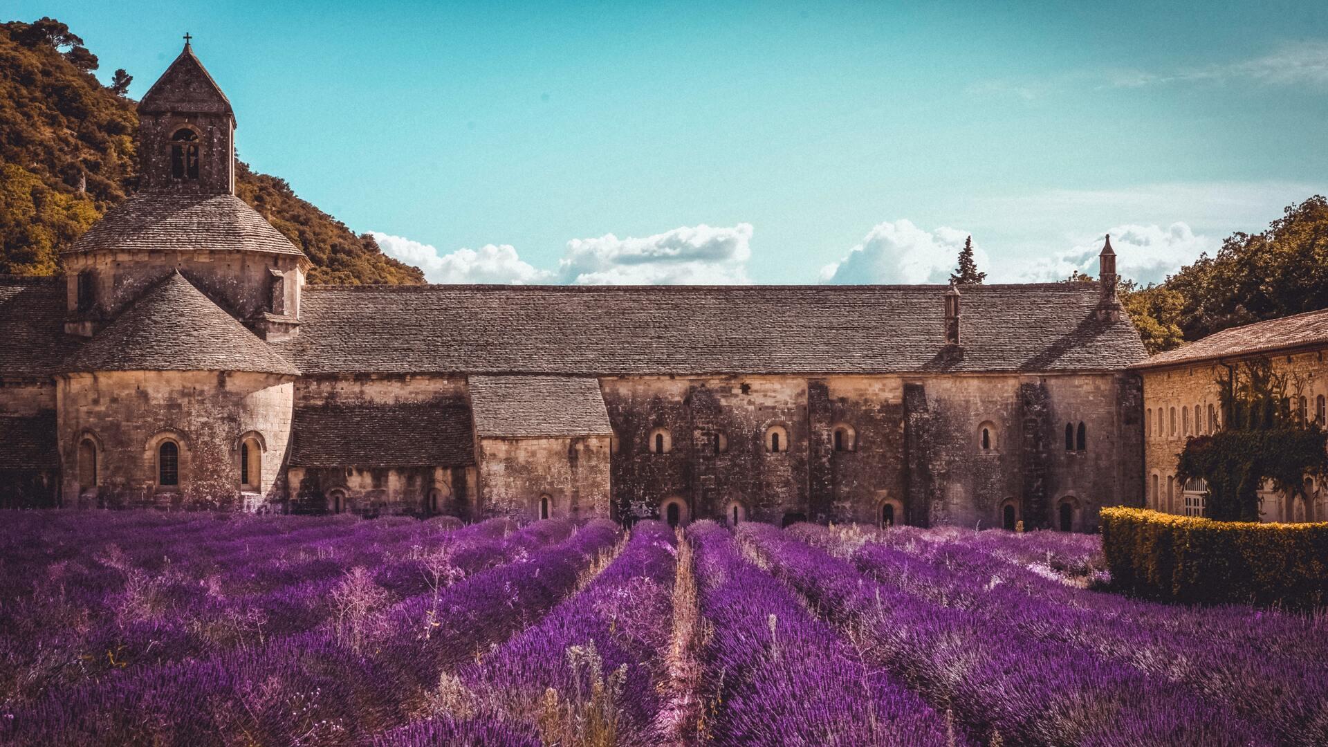 Lavande, Provence-Alp-Cote-d'Azur