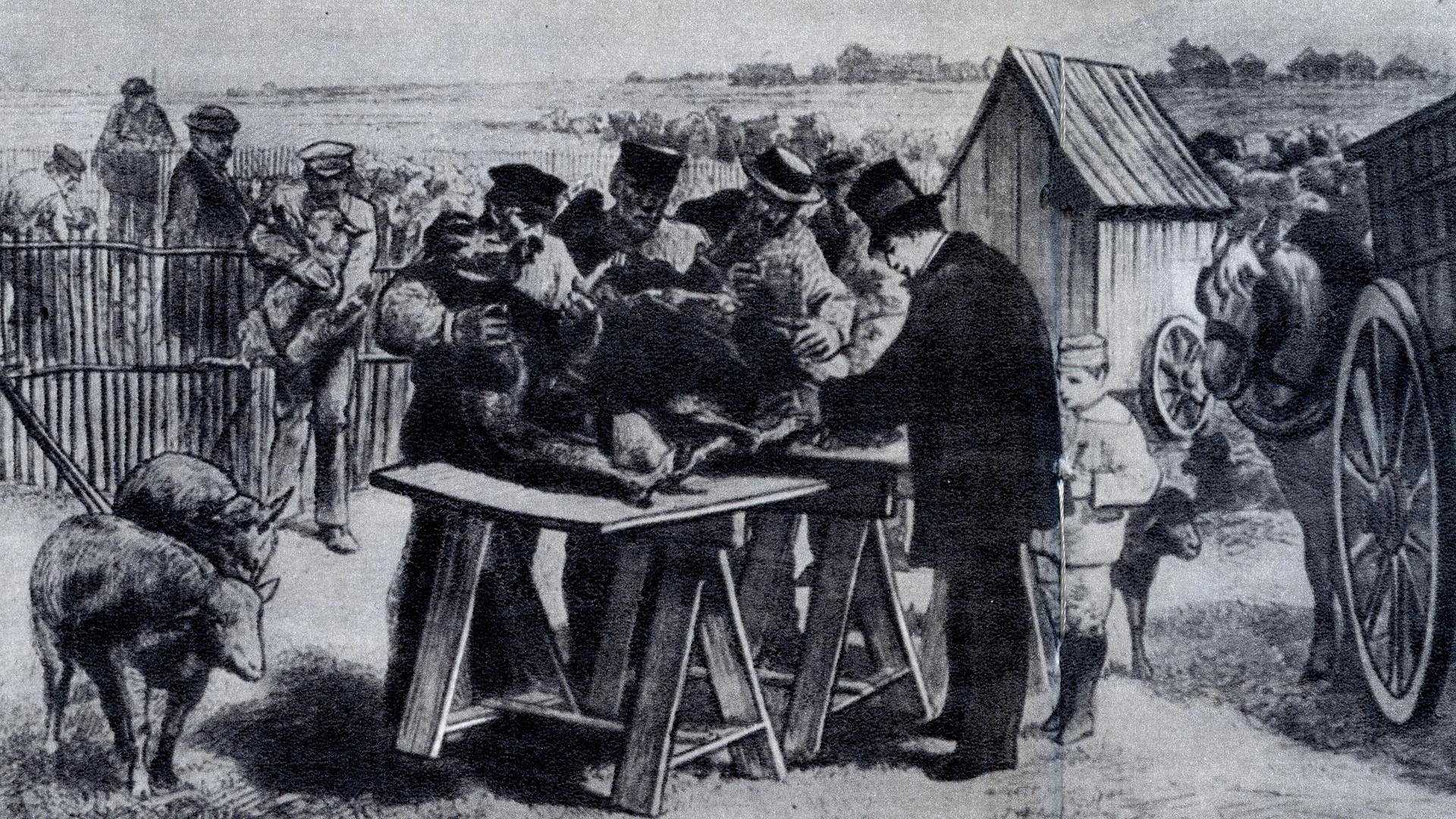 Pasteur vaccination